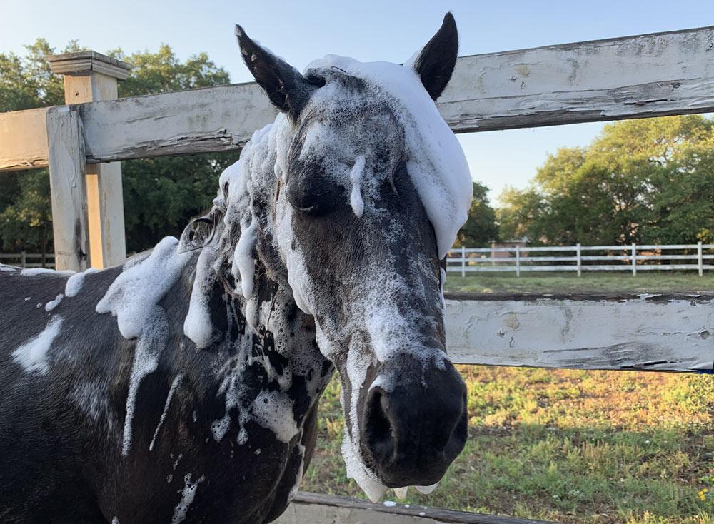 alamo-horse-contact